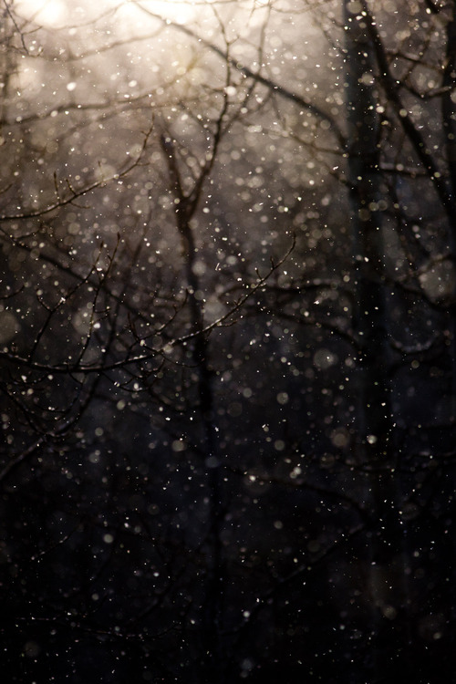 snowy nights