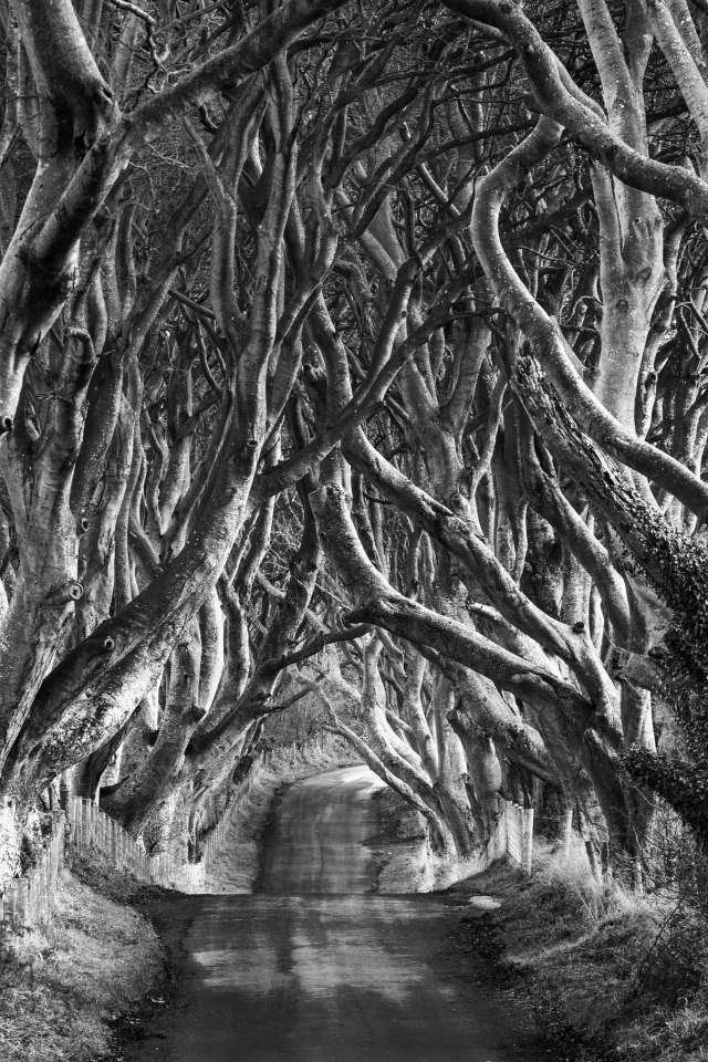 loverofbeauty:   Janet Wippell, The Dark Hedges, Northern Ireland