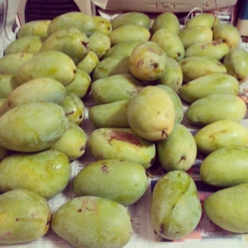 Mangoes for sale. Haha!