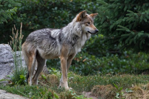 treehugger:  Dogs are going extinct: 8 most endangered canid species  We're celebrating Endangered Species Day by bringing attention to the diverse and beautiful canid species around the world that are in danger of becoming extinct. We hope that by learning about these amazing relatives of our well-loved domestic dogs, readers will be encouraged to act to protect these species.