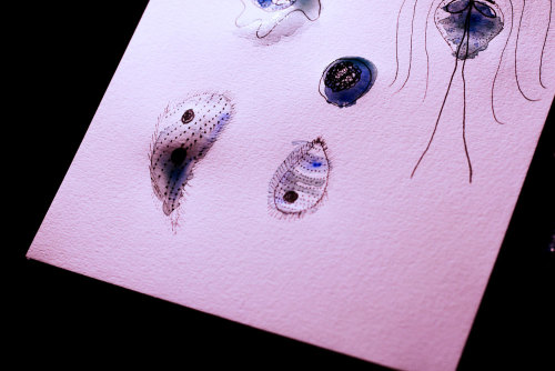 saskiakeultjes:  studies of protozoa and cells / science illustration / ink and water colors on thick paper / by Saskia Keultjes