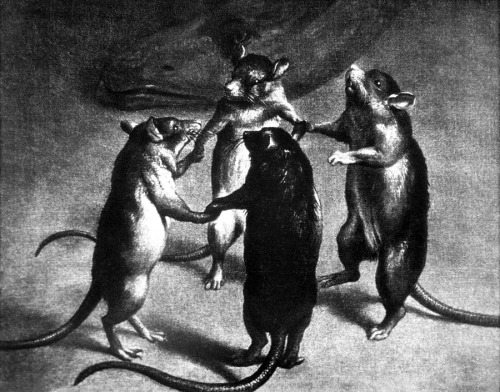 meet-me-at-the-morgue:  Dance of the Rats {unknown Flemish artist 17th century}