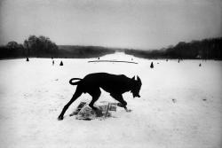 Josef Koudelka  Old Black Dog Films Logo