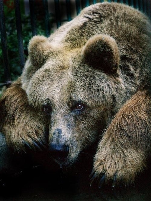 bear by kanoo travel