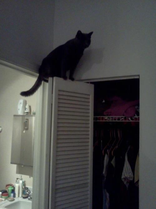 get out of there cat. you are not a bird. and you cannot fly…