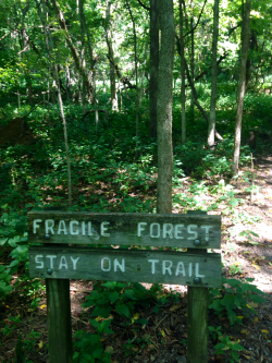 pretty tree mine summer green nature forest plants Woods nashville hike tennessee plant blog