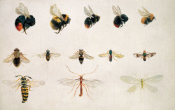 Study of bees and other insects Beatrix Potter, 'Studies of bees and other insects'. © Frederick Warne & Co. 2006 (via Beatrix Potter: Nature's Lessons - Victoria and Albert Museum)
