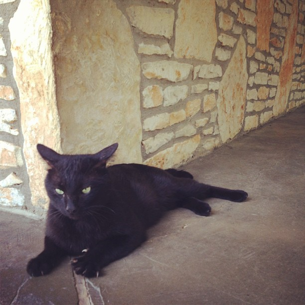 Salt Lick kitty keeping watch at the Cellars' tasting room.