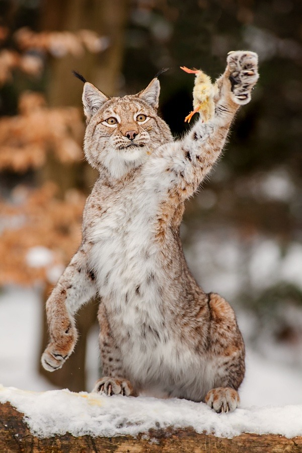 eqiunox:  catch me if you can  by Stefan Betz on Fivehundredpx.