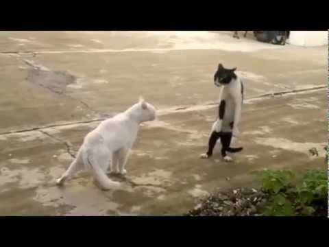 [Video] Cat Fight (Sword Fight?)Cool kitty fight. That black and white one looks like he could be a Puss-in-Boots descendant.