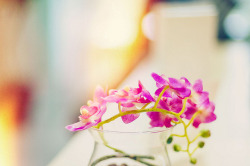 Orchid by Bady qb on Flickr.Via Flickr: Nice workspace500px | Tumblr | Twitter | Instagram