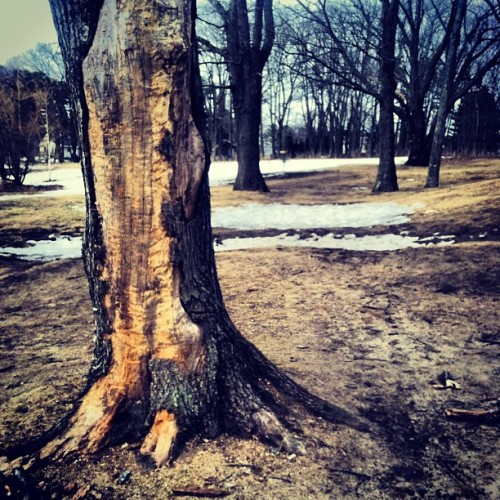 Let me see you stripped down to the bone. #tree #discgolf #sport #winter #pleasanthill #course #scarborough #maine #cold #nature #scenery #iphonography #iphonesia #instacool #instagood #instamood #instafamous #instagramhub #instafollowers #igers #igdaily #ignation #photography #photographer #jj #jj_forum #xpro2 #lyrics #shinytoyguns #bro  (at Pleasant Hill Disc Golf)