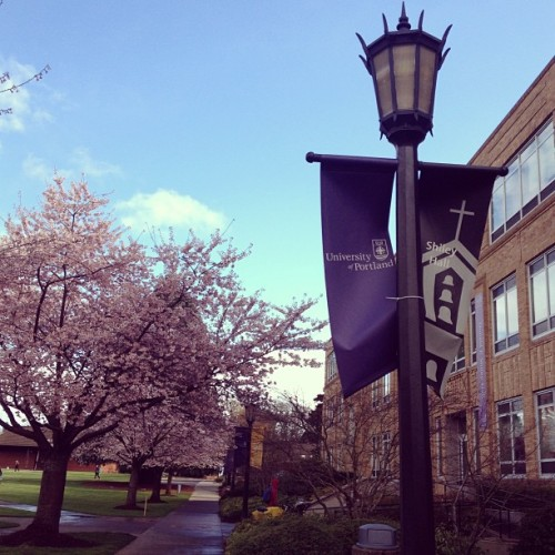 I love cherry blossoms!  (at Shiley Hall)