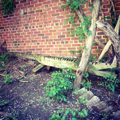urban gator 🐊 #snap #alligator #sculpture #wood #urbex #adventures #avam #baltimore  (at American Visionary Art Museum)