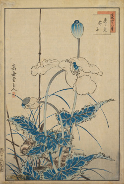 heaveninawildflower:  Bird and Poppies ( circa 1850 -1870) by Sugakudo. Woodblock print on paper.  Bilbao Fine Arts Museum Google Art Project: Home via Wikimedia.
