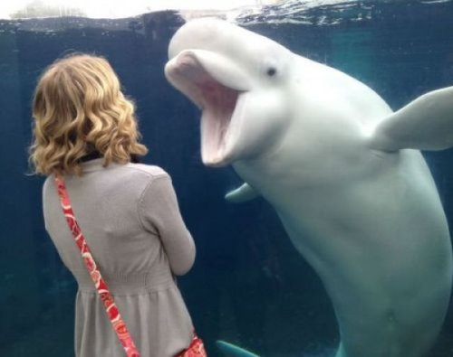 Beluga Whale Hates That Dress To be fair, the girl's not the one wearing white after Labor Day.