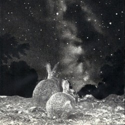 Stargazing #bunny #bunnies #rabbit #rabbits #sky #galaxy #stars #blackwhite #cutandpaste #collage #collageart #stars #animals #mine #meaas
