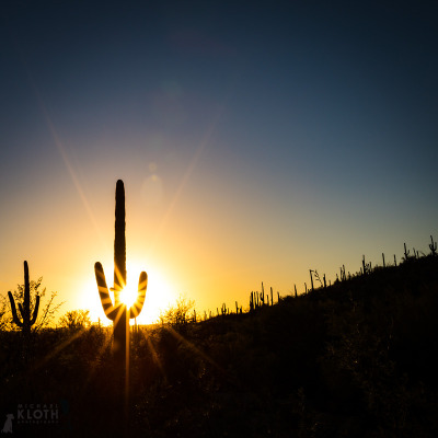 saguaro-sunset