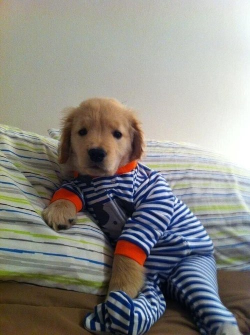 niknak79:  A puppy in a onesie.