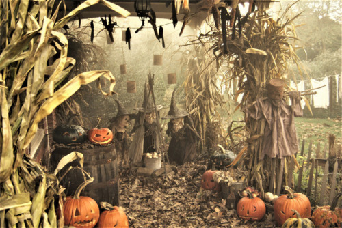 Halloween 2017 Halloween 1921 halloween pumpkinrot pumpkinrot.com scarecrow pumpkins twig witches witches jack o& 039;lanterns