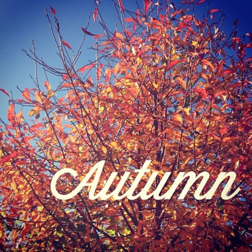 Already missing these full orange leaves. #autumn #winter #fall #weather