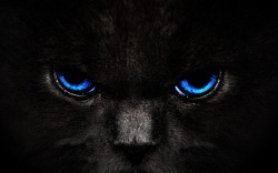 wallpapers-free:  Blue Cat Eyes