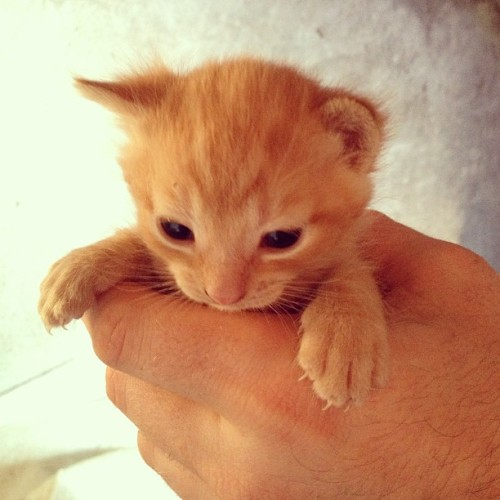This little guy is just too cute 😻