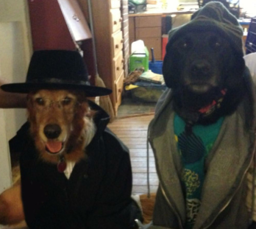 "Look at these dogs dressed up as ""Breaking Bad."" Why aren't they already your desktop background?! Why you haven't tattooed these glorious beasts on your calf? Do you hate happiness? See more Barking Bad and web goodness at HyperVocal.com"