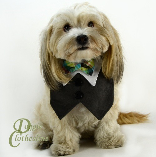 A NEW Dog Tuxedo has arrived. This handsome tux is made from butter soft ultrasuede fabric. We finished this one with a plaid bow tie. Woof. See our entire collection of wedding attire for dogs.