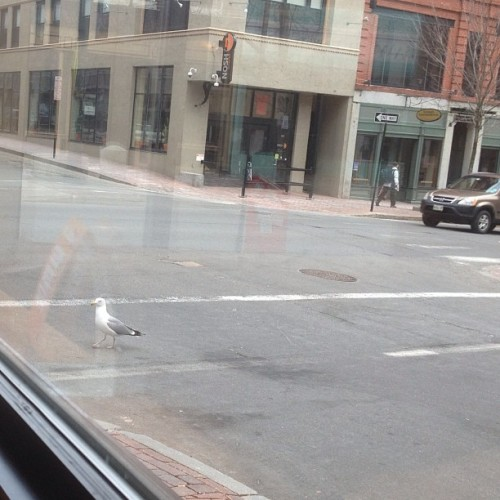 I usually #hate #birds but this #seagull was so #cute #walking in the cross walk like he a #person.. #morning #sunday #lol