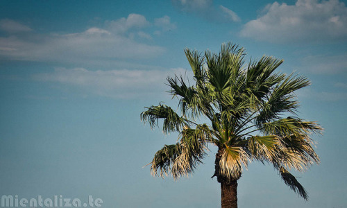 pukkachu:  Palmeira do ceu/ Heaven's palmtree by mientaliza.te on Flickr.