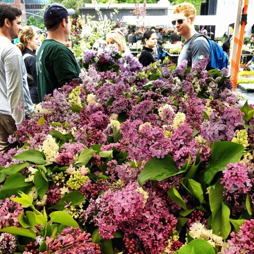 purple. (at Union Square Greenmarket)