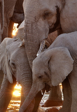 vurtual:  Three Elephants (by davidkiene)