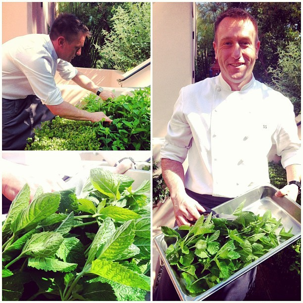 Picking mint from the @hotelbelair garden with Chef Sonny Sweetman. Beautiful day to be outside! #wpic (at Hotel Bel-Air)