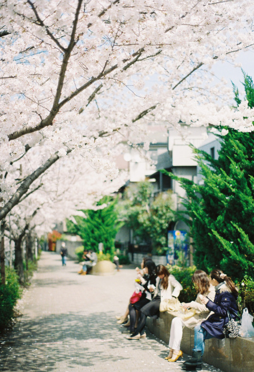 novemberschopin:  桜ランチ - SAKURA lunch (by ozuma.)