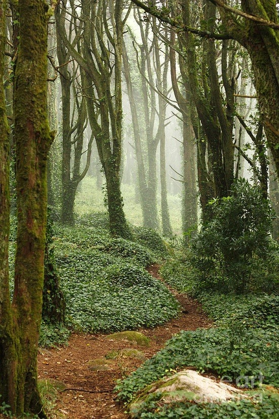 inhasa:  Path in green forest