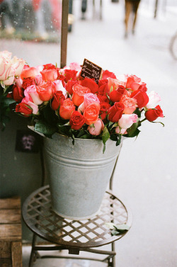secretsofahappylife:  roses by {this is glamorous} on Flickr.
