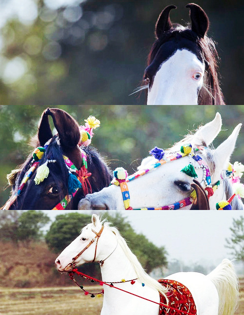 haefir:  Marwari horse - bravery and courage
