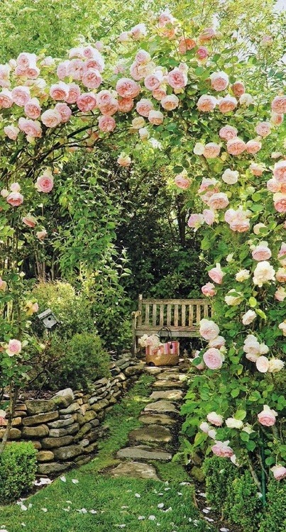 dyingofcute:  fairy  I used to have a garden similar to this. But then I got busy…