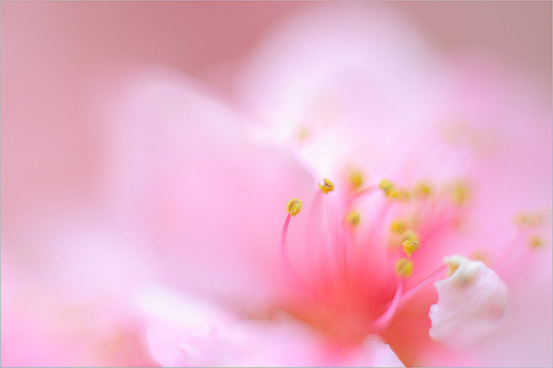 Blossom  by Bahman Farzad on Flickr.
