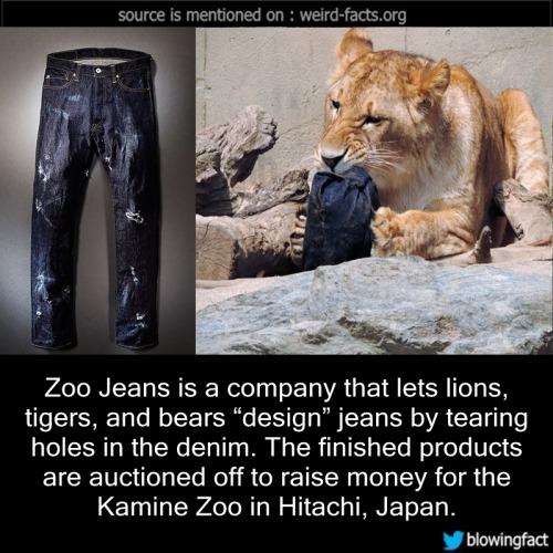 Zoo jeans design tearing holes denim Kamine Zoo Hitachi Japan facts