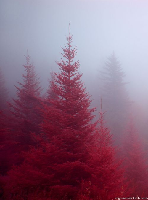 imgoverdose:  Red Forestmore awesomeness here