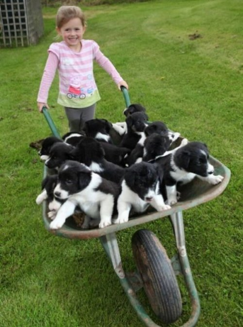 What if she drops the fucking barrow and all the puppies fall over. That ain't safe.