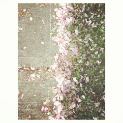 #irondequoit #home 🌸💕