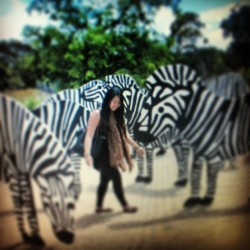 Walking amongst #Zebra's 😅