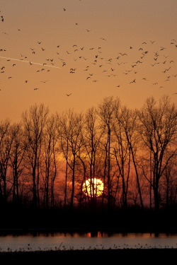 Gorgeous photo of the sun setting beyond the bare-branched trees. ~ trish   Calling it a Day  ** Read TrishCausey's Blog! — now with more awesomeness! **