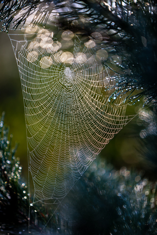 fairycemetery:  swansong-willows:  Spiders web (by Torehegg)  ❤