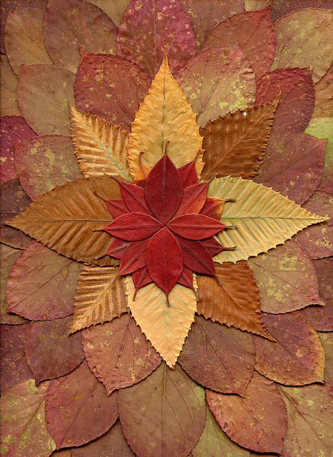 raspberrytart:  55094.01 Rhododendron, Betula, Stewartia by horticultural art on Flickr.