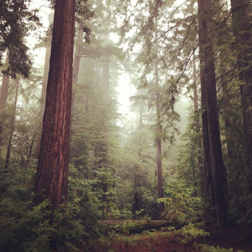 just-breezy:  Redwoods by Takenbytrees