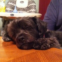 ❤❤❤❤❤ sleepy boy at the dinner table